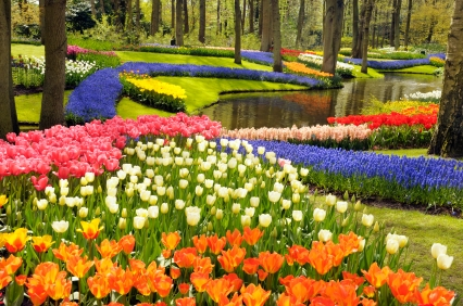 flower-garden-colorful