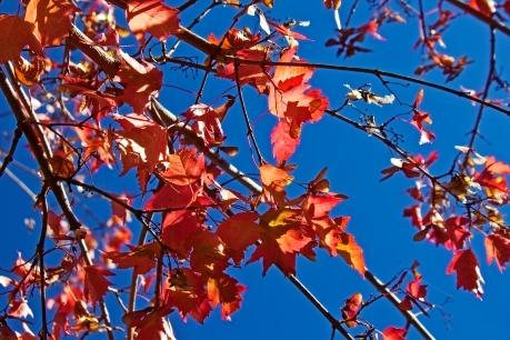 fall-season_fyILVnwd.jpg